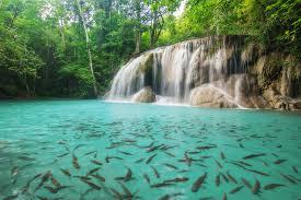 น้ำตกเอราวัณ สถานที่ท่องเที่ยวที่สะอาดมากไม่มีขยะเลย ภายในน้ำก็จะมีปลาพลวง ตัวสีน้ำตาลทั้งตัวเล็กและตัวใหญ่