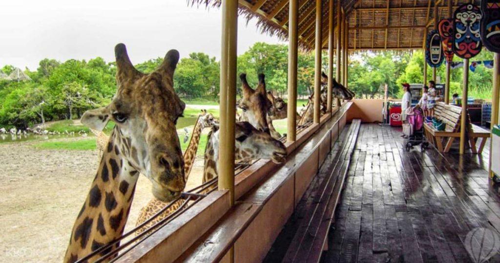 สถานที่ท่องเที่ยว ใกล้ชิดสัตว์แบบเอกซ์คลูซีฟ คือ ซาฟารีเวิร์ด (Safari world) – สวนสัตว์ที่เปิดโอกาสให้ผู้เข้าชมสามารถสัมผัสใกล้ชิดสัตว์ ด้วยสัตว์ที่มีกว่าสองพันตัว และด้วยโชว์การแสดงสัตว์อันแสนตระการตา