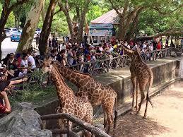 """สถานที่ท่องเที่ยว ใกล้ชิดสัตว์แบบเอกซ์คลูซีฟ คือ สวนสัตว์เปิดเขาเขียว ชลบุรี – สวนสัตว์ที่เก่าแก่และเปิดให้บริการมากว่า """"60 สิบปี"""" ที่เปิดโอกาสให้ผู้คนได้ใกล้ชิดและสัมผัสกับสัตว์ มีทั้งโซนสวนสัตว์เปิดและการแสดงโชว์"""