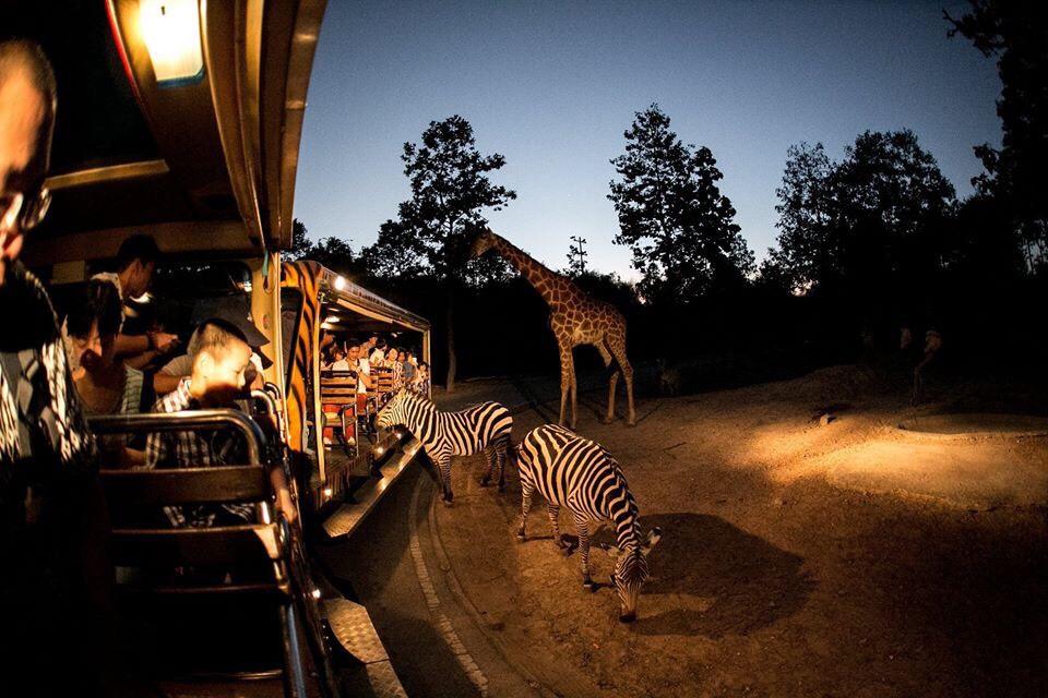 """สถานที่ท่องเที่ยว ใกล้ชิดสัตว์แบบเอกซ์คลูซีฟ คือ เชียงใหม่ ไนท์ ซาฟารี (Night Safari) – อีกสวนสัตว์ที่เรียกได้ว่ามีไฮไลท์อยู่ที่ """"Night Safari"""" เพราะรวมสัตว์กลางคืนไว้มากมาย"""