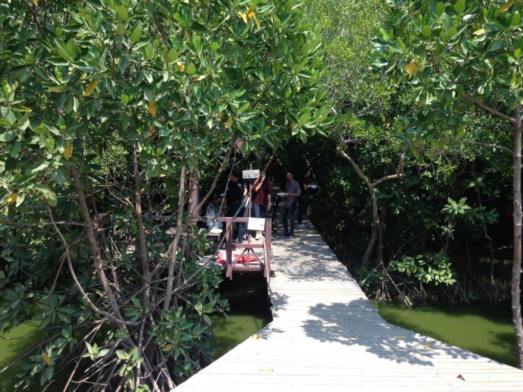ป่าชายเลนบ้านแหลม เป็นแหล่งท่องเที่ยวเชิงนิเวศน์ที่นักท่องเที่ยวเมื่อได้มาเยือนแล้วต้องประทับใจกับความเป็นธรรมชาติ