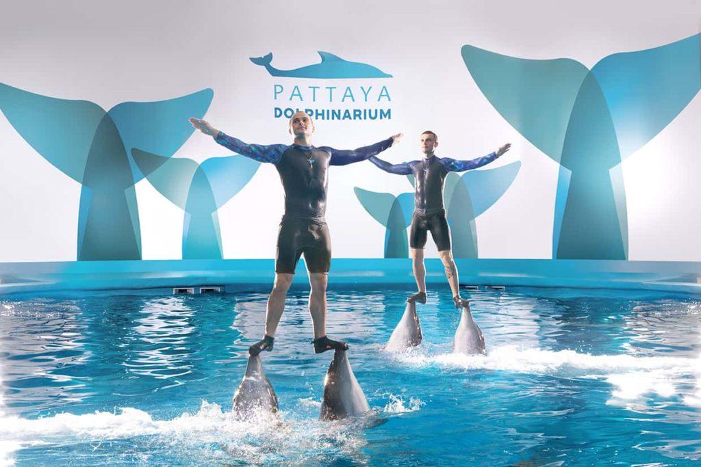 สถานที่ท่องเที่ยวพัทยาที่ไม่ได้มีแค่ทะเล สถานที่สองที่แอดอยากจะแนะนำ คือ Pattaya Dolphinarium สถานที่ท่องเที่ยวสามารถรับชมโลมา