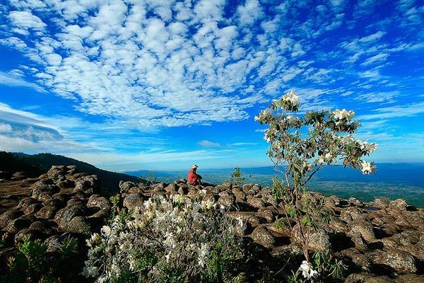 ท่องเที่ยวเมืองสองแคว จังหวัดพิษณุโลก สถานที่แรก ก็คือ อุทยานแห่งชาติภูหินร่องกล้า