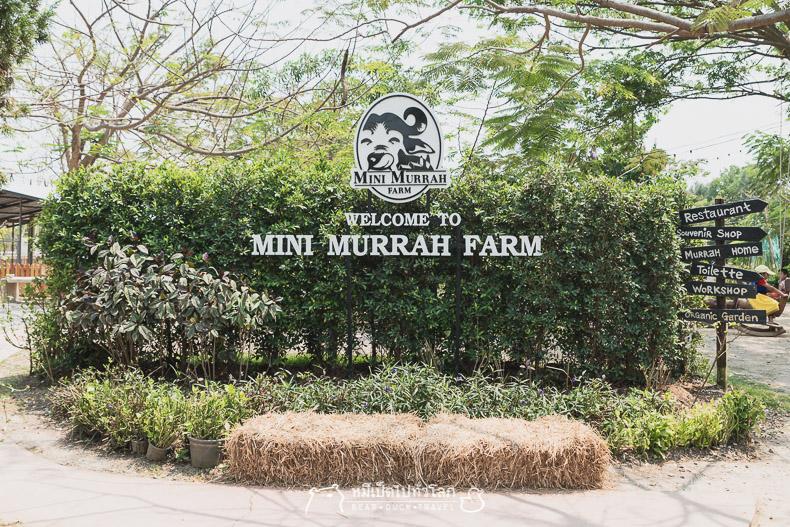 มินิ มูร่าห์ ฟาร์ม