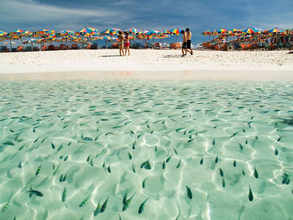 เกาะไข่นอกทะเลใสสะอาดมองเห็นปลาสวยงาม