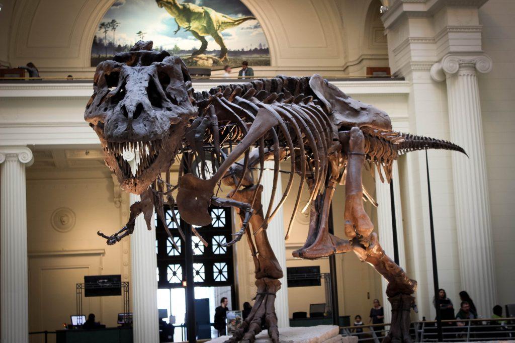พิพิธภัณฑ์ไดโนเสาร์ภูเวียง น่าเที่ยวมาก