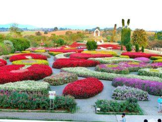 สถานที่ท่องเที่ยวทุ่งดอกไม้ เที่ยวหน้าหนาว บรรยากาศดี