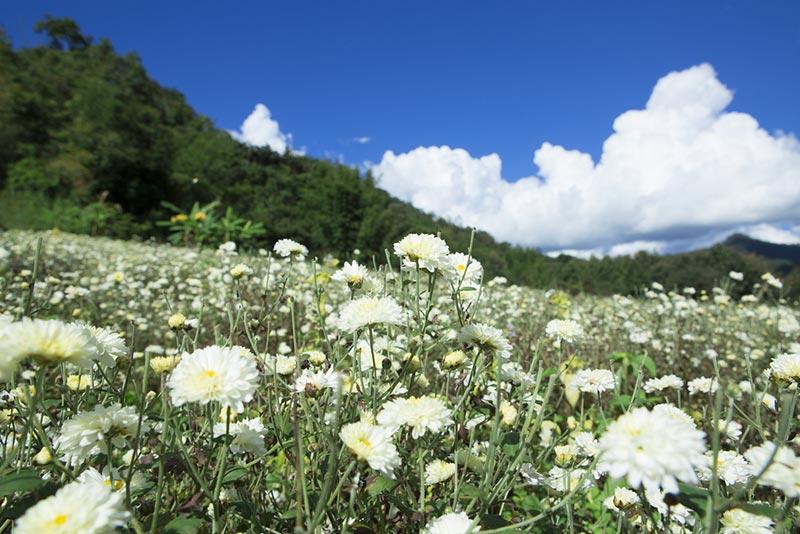 สถานที่ท่องเที่ยวทุ่งดอกไม้