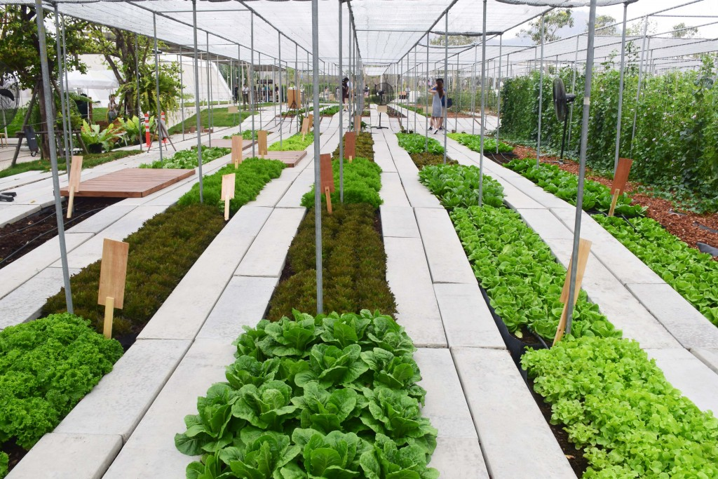Coro Field กิจกรรมปลูกผัก