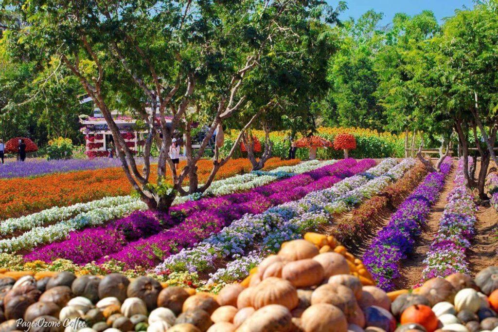 The Little Garden ที่มีดอกไม้สีสันสวยงาม