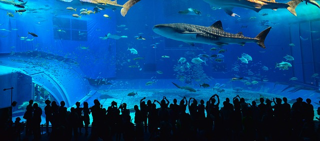 พิพิธภัณฑ์สัตว์น้ำชูราอุมิ โอกินาว่า